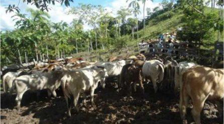 La Dirección Regional de Agricultura realizó la reunión de trabajo en el Km 09 en el fundo del Sr. Renzo Málaga, con los ganaderos de la región
