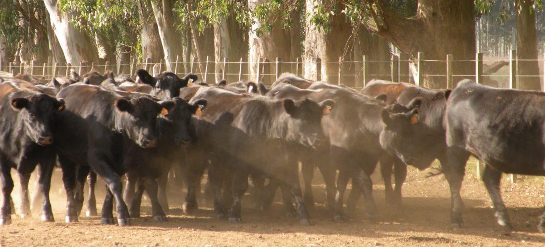 Primera parte de la Pasantía con más de 90 ganaderos de la región Madre de Dios, en el departamento Pando-Bolivia