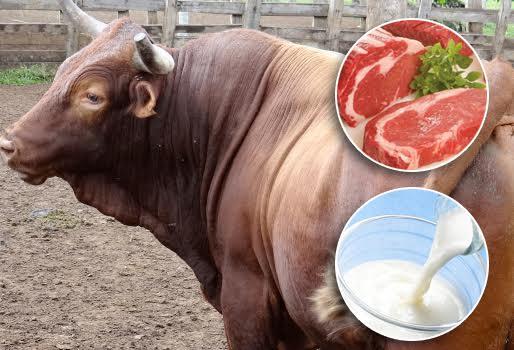 Conformación de la Asociación de Productores de carne y leche de Madre de Dios, en el Auditorio de la Dirección Regional de Agricultura