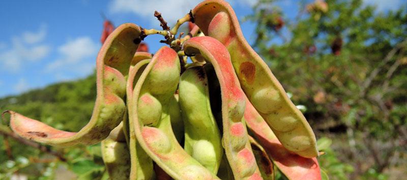 Información coordinada de la Dirección Regional de Agricultura Madre de Dios a través de Rediagro Regional Madre de Dios y Rediagro Nacional – MINAGRI