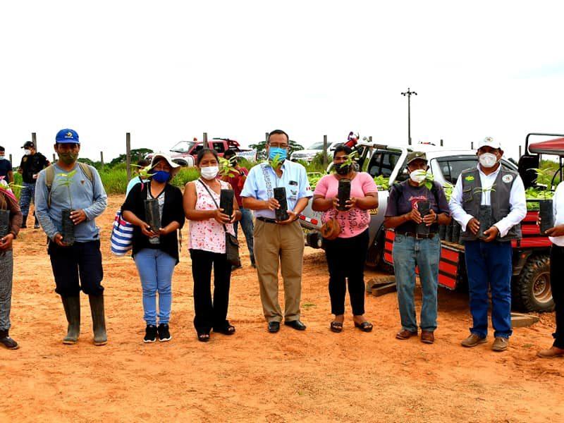 GOREMAD ENTREGA PLANTONES DE CACAO A AGRICULTORES DEL DISTRITO DE IBERIA.