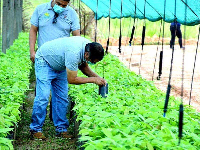 MONITOREO DE ENTREGA DE PLANTAS EN EL VIVERO FORESTAL DE IBERIA.