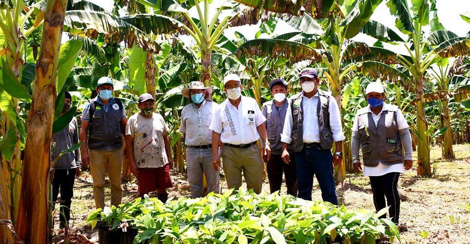 AUTORIDADES DEL GOBIERNO REGIONAL INSTALAN PLANTONES DE CACAO EN CAMPO DEFINITIVO EN LA COMUNIDAD MONTE SINAÍ.