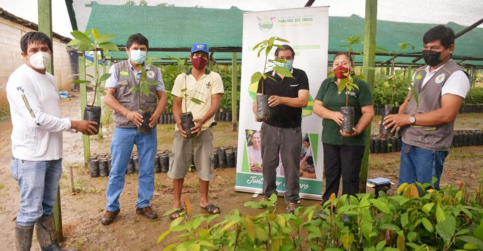 GOREMAD-DRA INICIARON ENTREGA DE PLANTAS INJERTADAS DE CACAO A BENEFICIARIOS DEL PROYECTO CUYAS TIERRAS FUERON INUNDADAS.