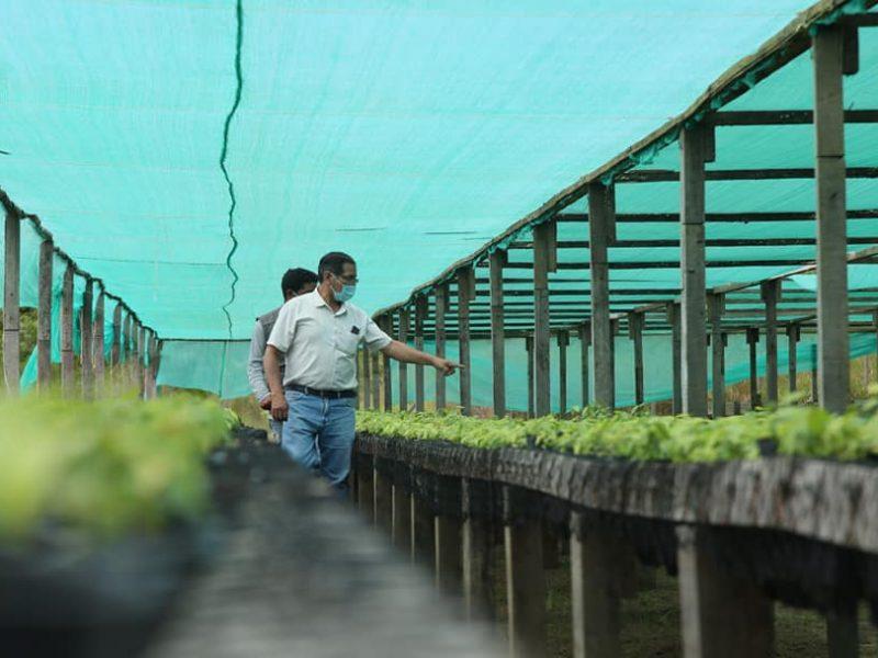 DRA SUPERVISA TRABAJO EN VIVERO AGROFORESTAL DE IBERIA, Y ACELERA PRODUCCIÓN DE PLANTAS DE CACAO, PARA ATENDER DEMANDA